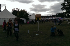 Electric Picnic 13